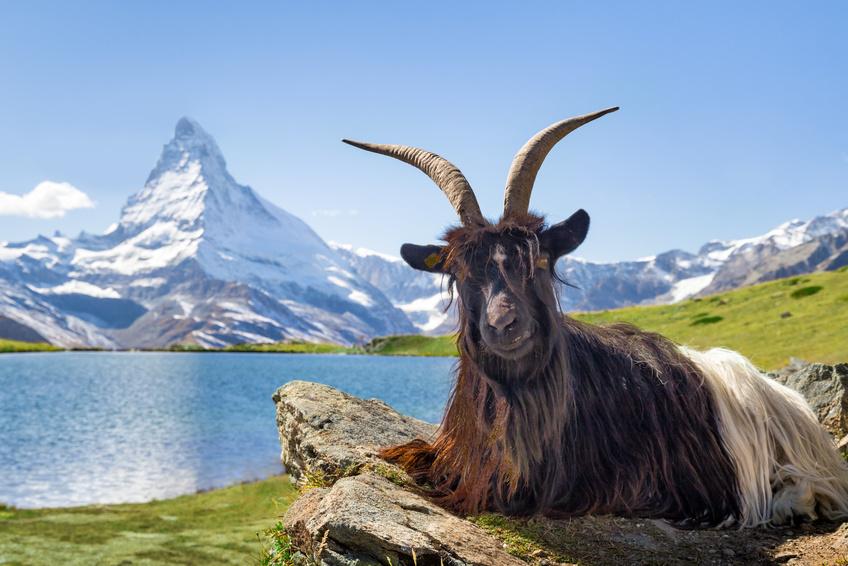 Sehenswürdigkeiten in der Schweiz @eyetronic, fotolia